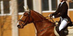 رياضة سباق الأحصنة